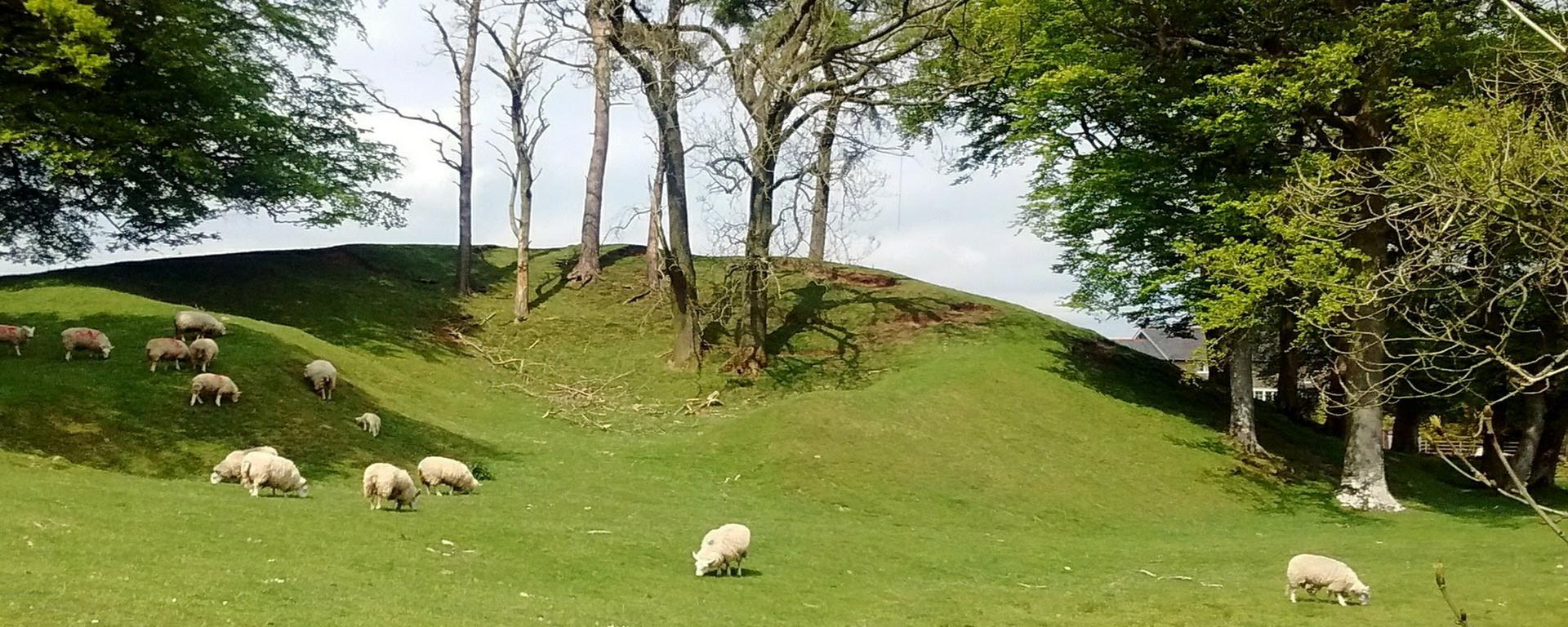 Sheep on the Tumulus from Crossgates road Opposite the Village Hall