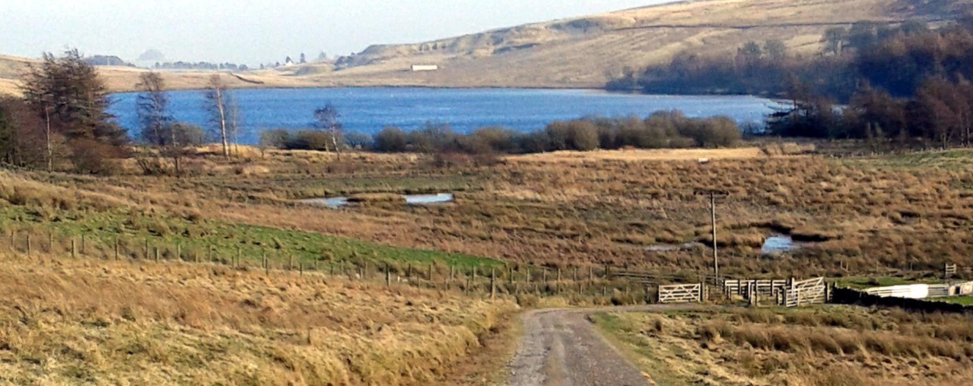 Tindale Tarn from the RSPB road ,there is a viewing platform near to the waters edge just off the road